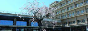 藤田総合病院